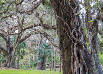 Southern mossy trees