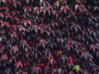 wall full of autumn leaves