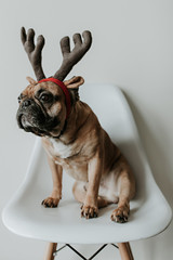 French Bulldog Puppy Dog Wearing Merry Christmas Antlers