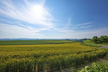 畑の広がる風景、美瑛町
