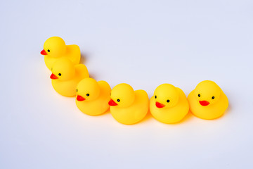 Leadership and friendship Concept: Yellow duck toy with white background.