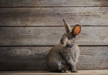 the rabbit on dark wooden background
