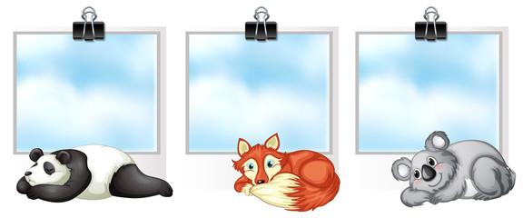 Three frames with wild animals