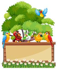 Border template wtih wild parrots