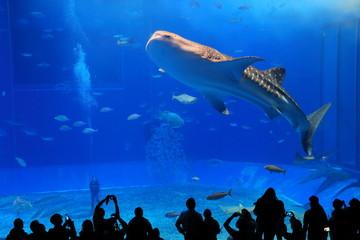 美ら海水族館 ジンベイザメと魚の群れ