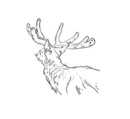 Hand drawn vector abstract fun cartoon Merry Christmas time drawing illustration design element with scandinavian deer sketch isolated on white background