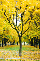 autumn landscape in a Park in Moscow