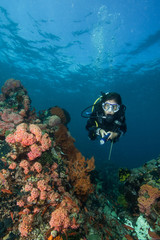 woman scuba diving on a tropical reef in the Philippines