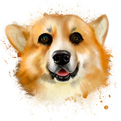 Portrait of dog the Pembroke Welsh Corgi, a gift from the fairies, a symbol of 2018