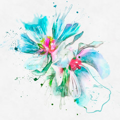Watercolor illustration of a mallow flower. Closeup on white background with paint splashes
