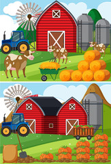 Two scenes of farmyard with cows and pumpkin patches