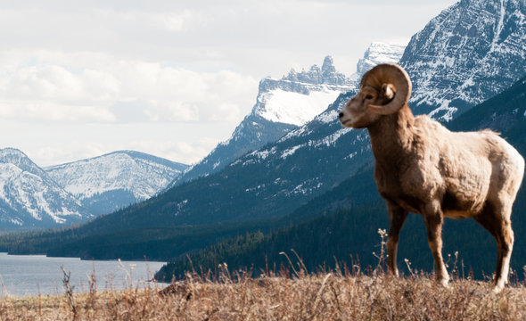 This is Mountain Sheep Country