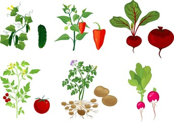 Set of different vegetable plants with fruits on white background