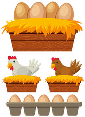 Chicken and eggs in the nest