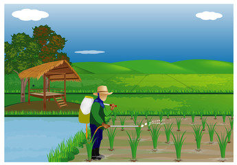 farmer sprays rice plant in paddy field vector design