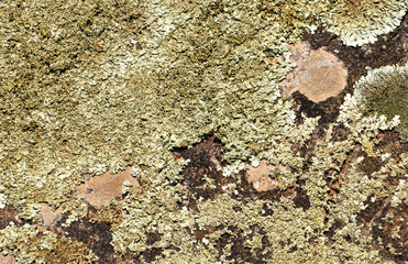 abstract background with green moss on stone for your design