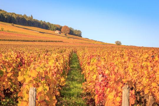 Le vignoble en Bourgogne