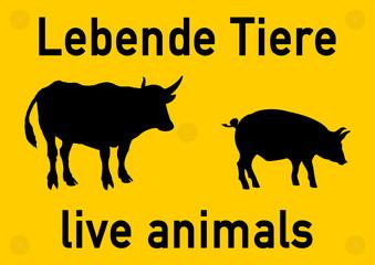 ws24 WarnSign - german: Beschilderung: Lebende Tiere / Viehtransport - Rinder - Schweine - english: live animals - livestock transportation - bovine - pigs - DIN A0 A1 A2 A3 - yellow xxl g5706