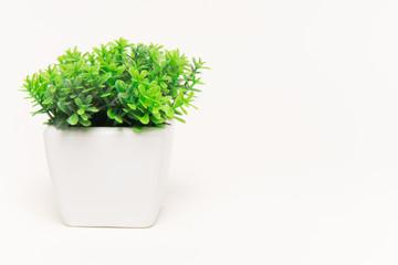Beyaz fon ve yeşil bitki