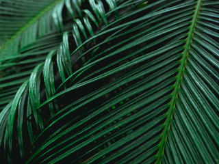 Fresh green leaves. Dark tone leaf in garden for natural tropical texture background and exotic style wallpaper.