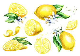Fresh Lemon fruit compositions collection. Watercolor hand drawn illustration