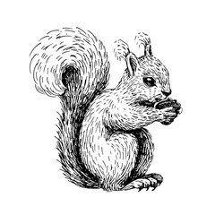 Sketch line art drawing of squirrel. Black and white vector illustration. Cute hand drawn animal.