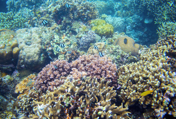 Tropical fish and coral reef. Underwater landscape photo. Fauna and flora of tropical shore.
