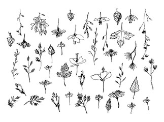 Set of hand drawn weed field herbs, flowers, leaves. Outline of  plants. Sketch or doodle vector illustration. Black image on white background.
