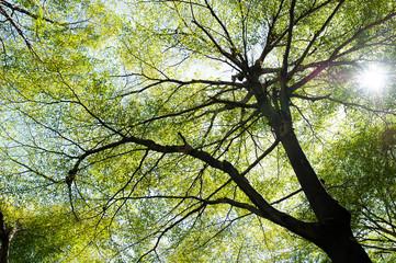 leaf on sky. forest background . green nature background.big tree. leaves background