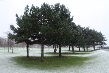 Trees protect a small patch of grass as the snow falls in Thames Barrier Park, London