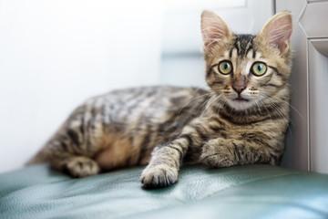 little striped kitten with green eyes