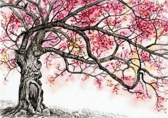 """Рисунок акварелью """"Старая вишня цветёт"""""""