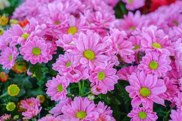 Beautiful pink flower blooming in a garden