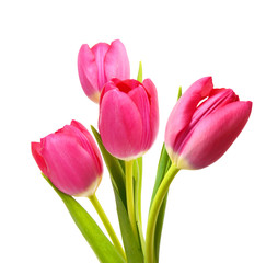 Foto op Plexiglas Tulp Flower Tulips as Symbol of Romance and Love