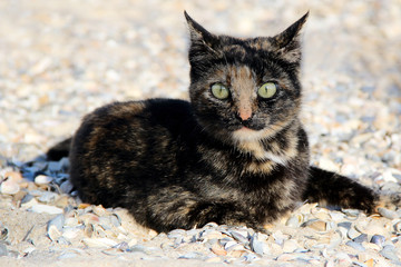 cat on the beach. photo