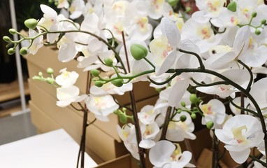 White Artificial Streaked Orchid Flowers or Phalaenopsis