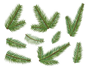 Different christmas tree branches set. Christmas elements tree clipart