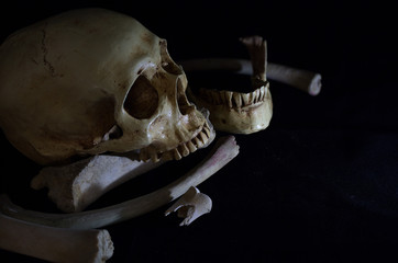 Skull with jaw and pile bones on black background / Still Life image and selective focus..