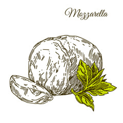 Slice of Mozzarella cheese and leaf. Engraving style. Vector illustration.