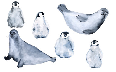 Seals and penguins. Isolated on white background.