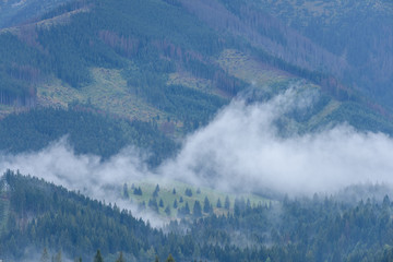 panoramic view of misty forest in mountain area