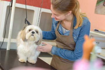 Groomer with pet dog