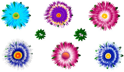 Set of different colorful asters with buds  flower beauty design unique vector pattern blue red pink yellow green white holiday spring