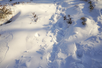 Path from traces on snow