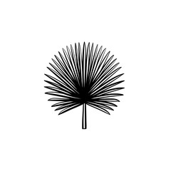Vector hand drawn spiky palm leaves outline doodle icon. Spiky palm leaves sketch illustration for print, web, mobile and infographics isolated on white background.