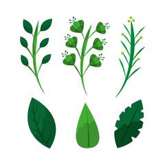 set of green weed leaves branch botanical vector illustration