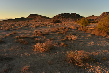 Mojave desert dawn landscape Pahrump Nevada