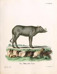 Illustration of pigs