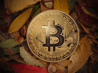Bitcoin BTC coin in autumn leaves, macro closeup.