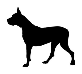 Portrait of Great Dane vector silhouette illustration isolated. Harlequin dog. German dog.  Dogo Argentino silhouette.  Beware of dog.